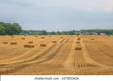square straw bales lie on a field after the grain harvest