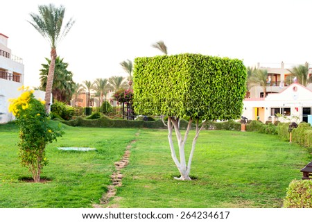 Square topiary tree in Egyptian formal garden. Sharm-el-sheikh. Summertime outdoors.