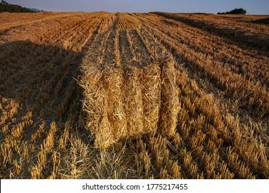 Balo de trigo cuadrado en un campo
