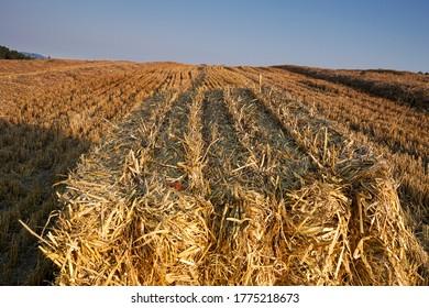 Balas de trigo cuadrado en una vista de campo
