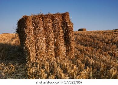 Balas de trigo cuadradas en un campo