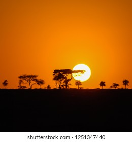 Squared image of a beautiful African sunset in the Serengeti Park savannah plains, Tanzania, Africa with silhouettes of acacia trees and the sun setting on the horizon. Wild safari landscape.