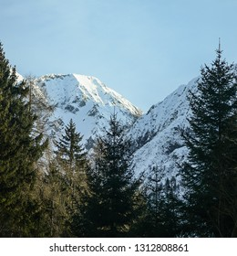 Squared image of Passo del Tonale, Adamello, The Alps, Italy. Snowy mountain landscape with beautiful snowy slopes and firs forest. Copy space for text