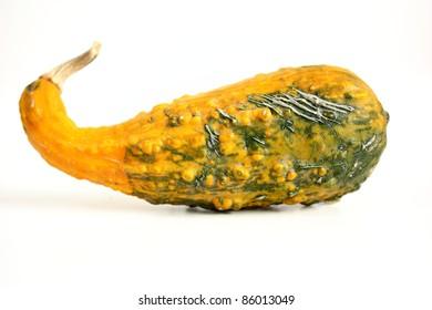 Squash (Cucurbita pepo)