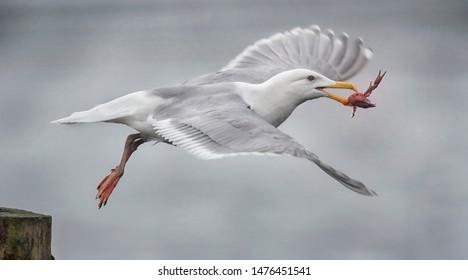 Squawking Bird Images, Stock Photos & Vectors   Shutterstock