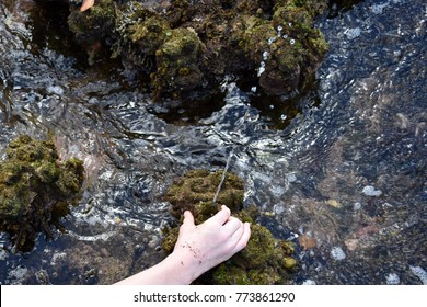 Squeezing water from a sea squirt