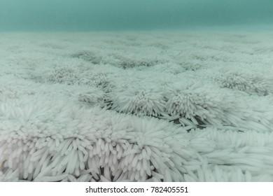 Squid eggs on the ocean floor