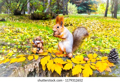 Squirrel in autumn park forest. Squirrel with nuts in autumn forest park scene. Autumn squirrel portrait. Squirrel in autumn park view