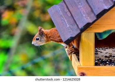 Squirrel in a bird farm.