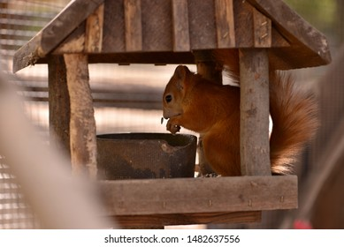 An squirrel in a bird house while eating.