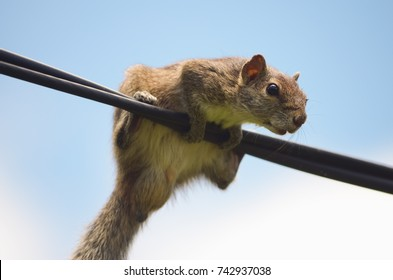 Squirrel bottom on high wire looking in blue sky background