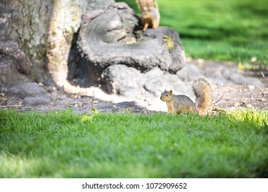 Squirrel By a Tree