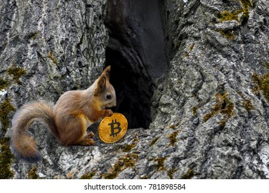 Squirrel carries will Soltau coin bitcoin to the house in the hollow tree. To store bitcoins. Store keytovalue.