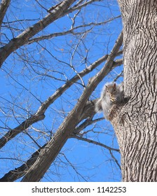 Squirrel of Central Park