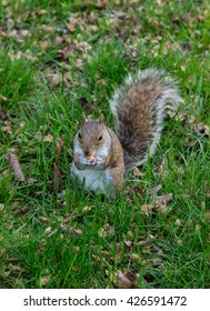 Squirrel at Central Park, New York.