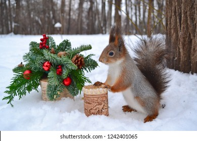 Christmas Squirrel.Squirrel Christmas Stock Photos Images Photography