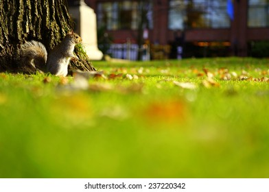The Squirrel and the City