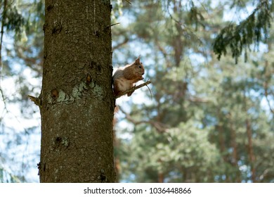 squirrel in a city Park sitting on a tree