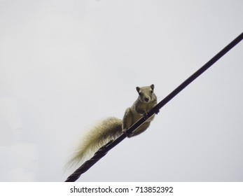 Squirrel climb the wires.
