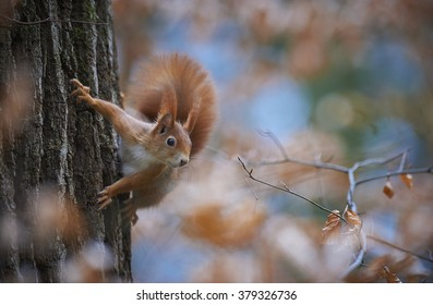 A squirrel climbing a tree