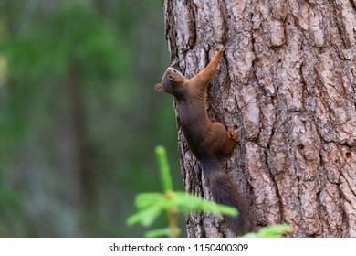Squirrel climbs wildlife