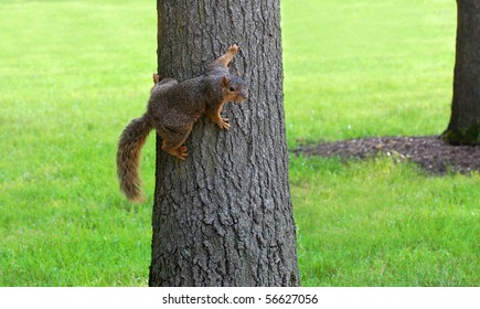 Squirrel clinging to tree, grass and tree in background, horizontal
