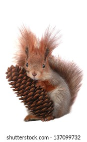 squirrel with the cone on a white background
