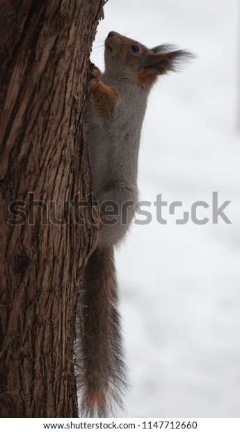 Squirrel crawls on wood