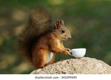 squirrel with a cup in the foot