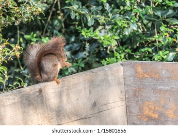 A squirrel eating a nut in the garden