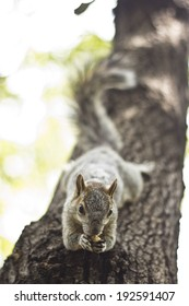 Squirrel eating a nut laid over a tree