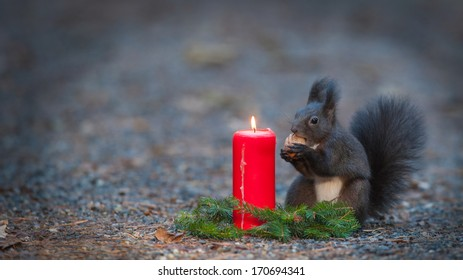 Squirrel is eating a nut near a candle.