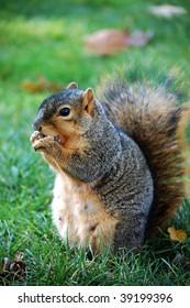 squirrel eating nut - vertical facing left