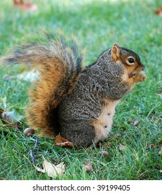 squirrel eating nut - vertical facing right