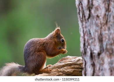 Squirrel eating on the wood