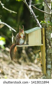 Squirrel eating seeds from a squirrel feeder