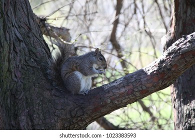 Squirrel eating in a tree