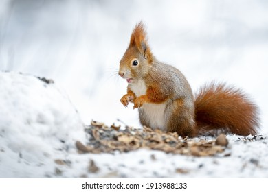 A squirrel eats nuts in a snowy park.