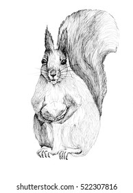 Squirrel with emerald ink illustration