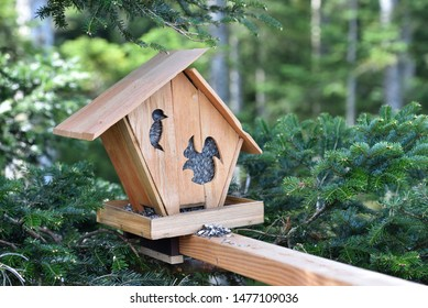 A squirrel feeder in the form of a house, installed in a coniferous forest on a spruce and filled with food - black sunflower seeds. Squirrel feeder in the German forest Schwarzwald