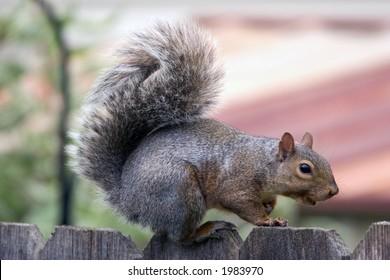 Squirrel flirts with photographer