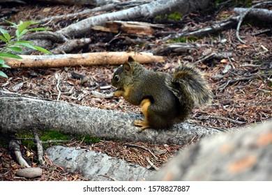 squirrel flor tree wild free