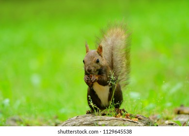 squirrel in the forest