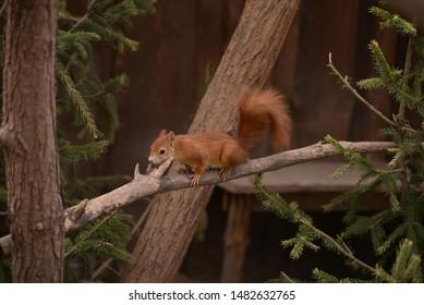 Squirrel in forest in a branch.