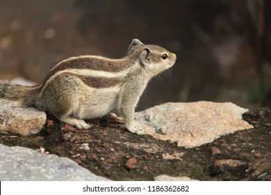squirrel at the garden of qutub minar