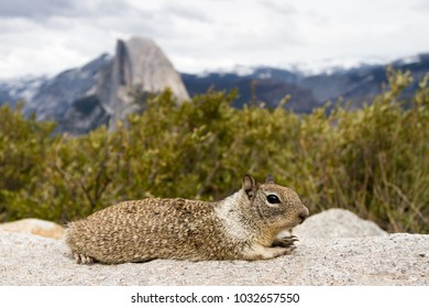 Squirrel at Glacier Point with Half Dome at background