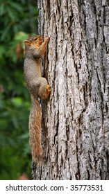 squirrel hanging on to tree
