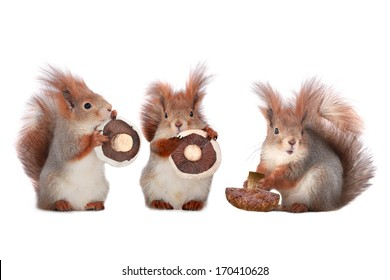 squirrel holds a mushroom on a white background
