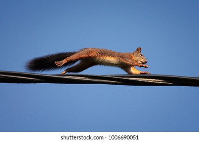 squirrel jumping on electrical wire