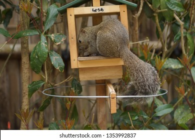 Squirrel at Kamakura